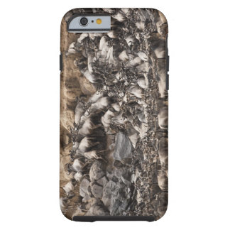 White-bearded Wildebeest or Gnu, Connochaetes Tough iPhone 6 Case