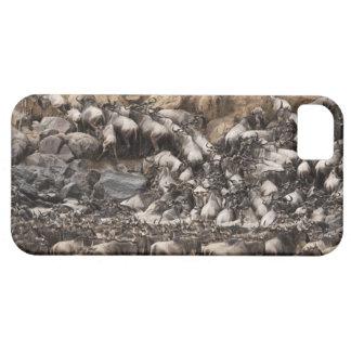 White-bearded Wildebeest or Gnu, Connochaetes iPhone 5 Cases
