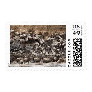 White-bearded Wildebeest or Gnu Connochaetes Stamp