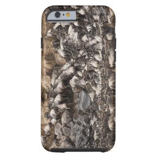 White-bearded Wildebeest or Gnu, Connochaetes Tough iPhone 6 Case