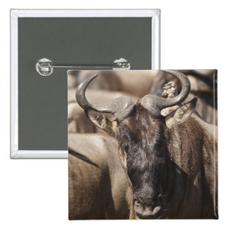 White-bearded Wildebeest with Wattled Starling Pinback Button