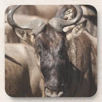 White-bearded Wildebeest with Wattled Starling Drink Coaster