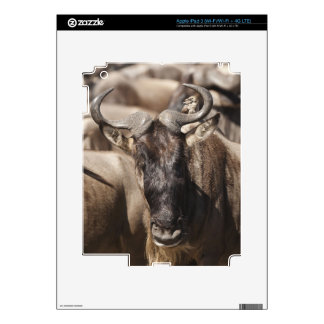 White-bearded Wildebeest with Wattled Starling Decal For iPad 3