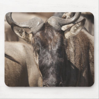 White-bearded Wildebeest with Wattled Starling Mouse Pad