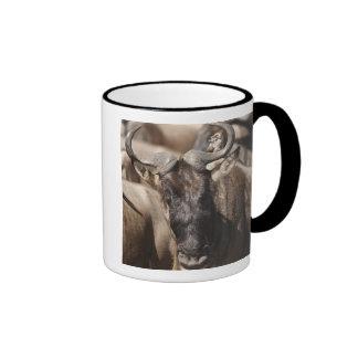 White-bearded Wildebeest with Wattled Starling Mug