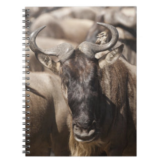White-bearded Wildebeest with Wattled Starling Notebook