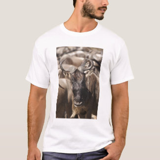 White-bearded Wildebeest with Wattled Starling T-Shirt