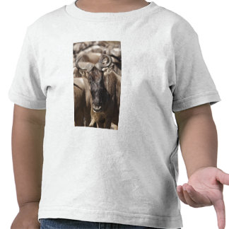 White-bearded Wildebeest with Wattled Starling Tshirt