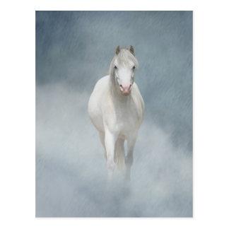 white beauty postcard