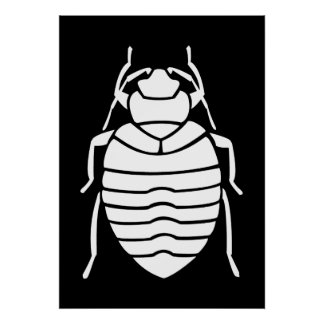 White Bedbug Insect Poster