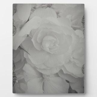 White Begonia Plaque