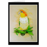 White Bellied Caique Greeting Cards