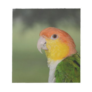 White Bellied Caique Parrot Outdoors Note Pad