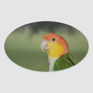 White Bellied Caique Parrot Outdoors Oval Sticker