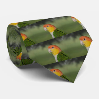 White Bellied Caique Parrot Outdoors Tie