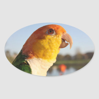 White Bellied Caique Parrot Oval Sticker