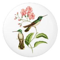 White Bellied Mountain Gem Hummingbird Ceramic Knob