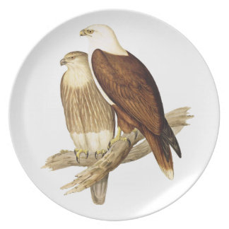 White Bellied Sea Eagle. Painting Dinner Plate