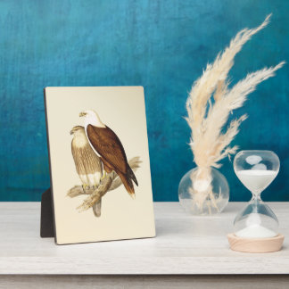 White Bellied Sea Eagle. Painting Plaques