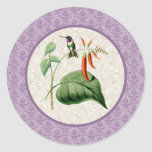 White Bellied Woodstar Hummingbird Stickers