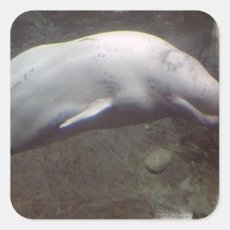 White Beluga Whale  Stickers