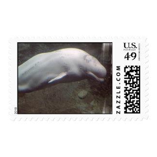 White Beluga Whales Stamp