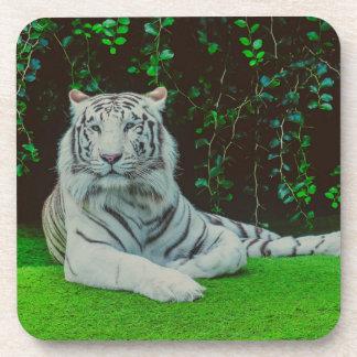 White bengal tiger beverage coaster