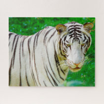 White Bengal Tiger. Big Cats. Jigsaw Puzzle
