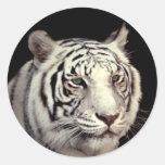 White Bengal Tiger Classic Round Sticker