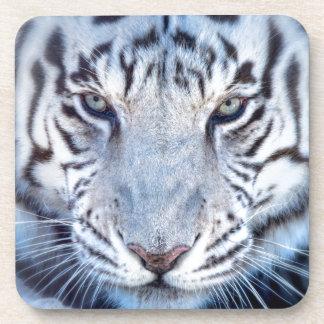 White Bengal Tiger Drink Coaster