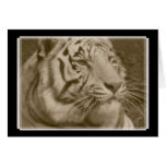 White Bengal Tiger in Sepia - Blank Note Card