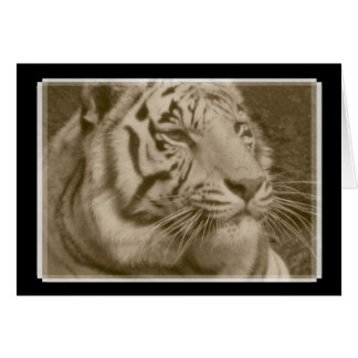 White Bengal Tiger in Sepia - Blank Note Card Card