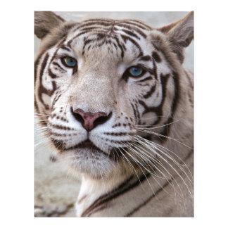 White Bengal Tiger Custom Letterhead
