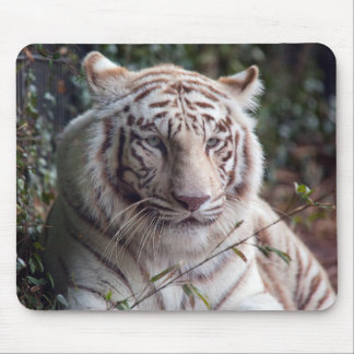 White Bengal Tiger Mouse Pad