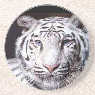 White Bengal Tiger Photography Beverage Coaster