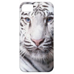 White Bengal Tiger Photography iPhone 5 Cover