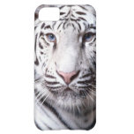 White Bengal Tiger Photography iPhone 5C Cases