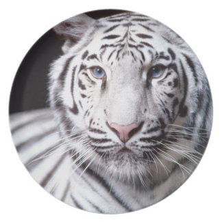 White Bengal Tiger Photography Melamine Plate