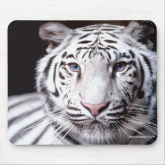 White Bengal Tiger Photography Mouse Pad