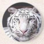 White Bengal Tiger Photography Sandstone Coaster