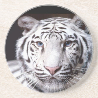 White Bengal Tiger Photography Sandstone Coaster