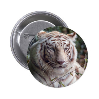 White Bengal Tiger Pinback Button