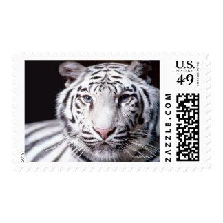 White Bengal Tiger Stamp