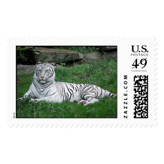 White Bengal Tiger Postage Stamps