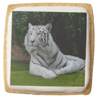 White Bengal Tiger Square Shortbread Cookie