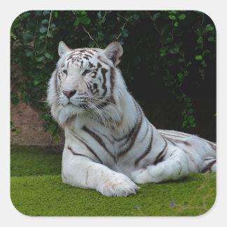 White Bengal Tiger Square Sticker