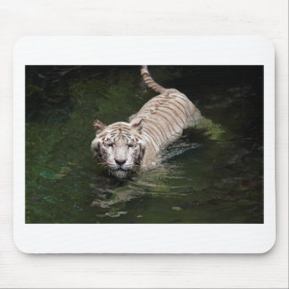 White Bengal tiger swimming in river Mousepad