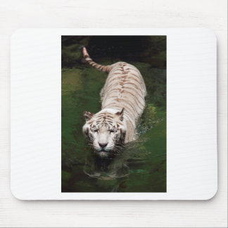 White Bengal tiger swimming in river Mousepads