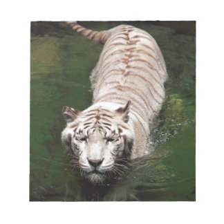 White Bengal tiger swimming in river Memo Notepads