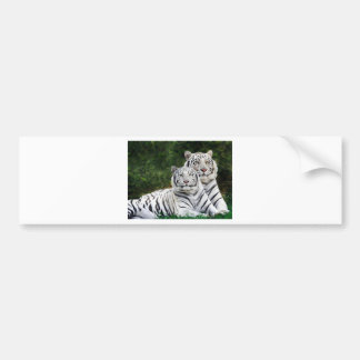 White Bengal Tigers Bumper Stickers